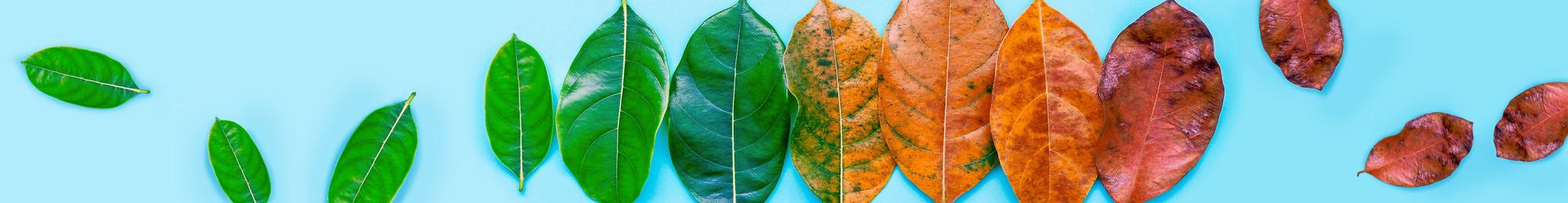 Unterrichtsmaterial Herbst | Cornelsen